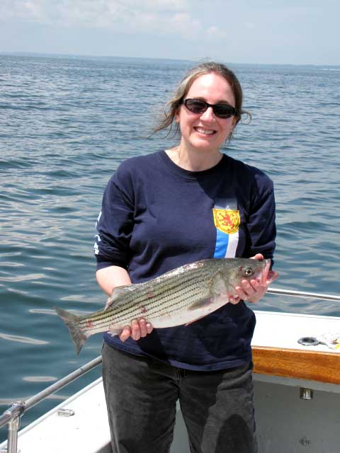 Charter fishing sportfishing the chesapeake bay with for Striper fishing chesapeake bay
